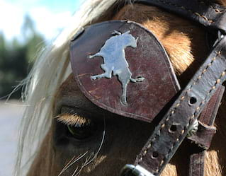 Belmond Castello di Casole, Horse Riding in Tuscany