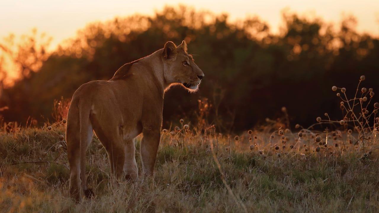 Belmond Eagle Island Lodge, Luxury Safari in Botswana