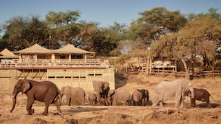 Herd of elephants strolling in front of thatched safari lodges under blue skies
