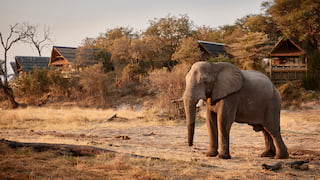 Lone elephant standing in front of thatched-roof safari lodges at sunset