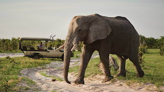 Close-up of a large elephant strolling in front of a safari rover