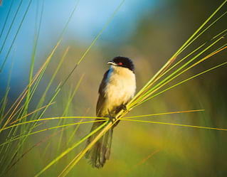 Bird Watching, Okavango Delta