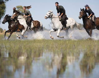 Horseback & Helicopter Safari, Game Viewing, Elephant