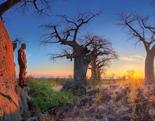 Bushmen Paintings and Baobab Trees