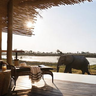Elephant strolling past a safari tent veranda with a plunge pool