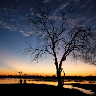 Silhouette of a tree against dark blue skies at sunrise reflected by a river