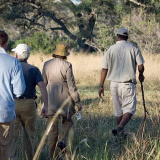 Guests being led by a safari guide through bushland in the savannah