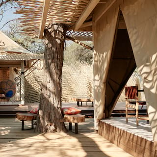 Luxurious safari lodges built around tree trunks with canvas walls
