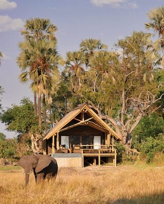 Lone elephant standing before a wooden safari hut among bushlands and trees
