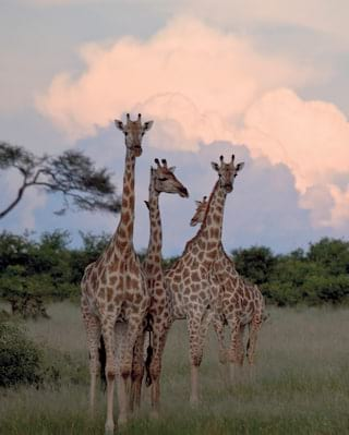 learn about wildlife conservation botswana