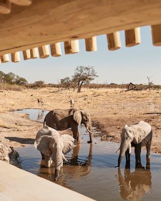 Herd of elephants splashing around in a watering hole