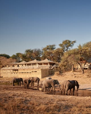 Elephants viewed from afar, strolling in front of wood-built safari lodges