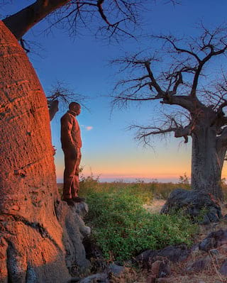 Bushmen Paintings and Baobab Trees Tour