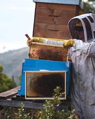 La Portofinese Estate honey lab