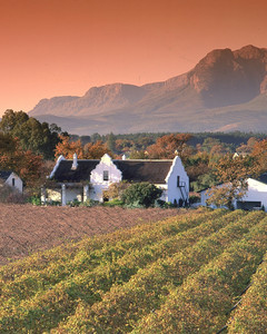 Wine Tours Cape Town