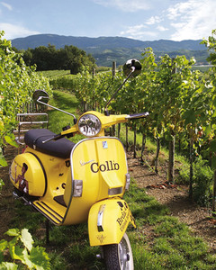 Tour del vino di Collio
