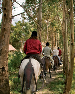 Peruvian Paso Horse Riding