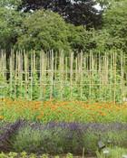 Gardens in Oxford